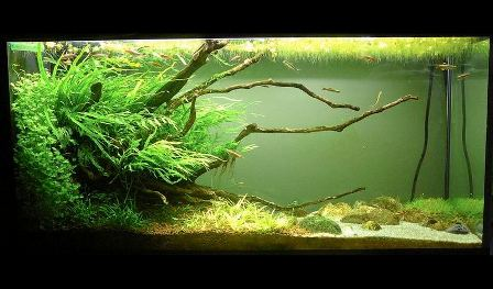 Acquario del mese AE Gennaio 2013 - Layout and photo by: Pierre